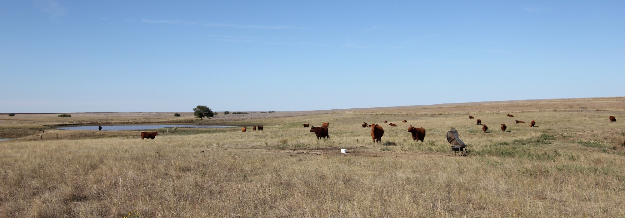 420+- Acres in Rush Co., KS